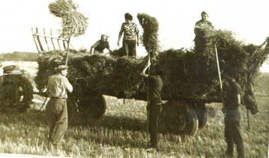 La moisson à Quiquery - années 50